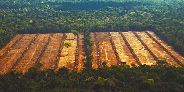 Deforestación de bosques en Santa Cruz, vista desde el aire. Foto: Eduardo Franco