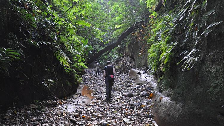 """""""Me tiraban fruta"""": Un turista chileno perdido en la selva boliviana dice que los monos lo salvaron"""
