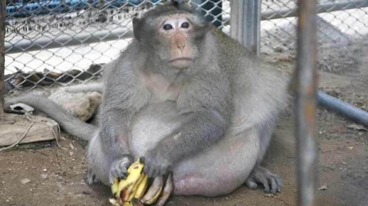 La nueva dieta de Tío Gordo se limita a proteínas magras, frutas y vegetales (AP)