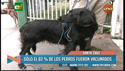 300 mil mascotas fueron inmunizadas durante la campaña de vacunación contra la rabia