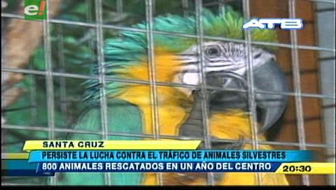 Rescatan 800 animales de traficantes