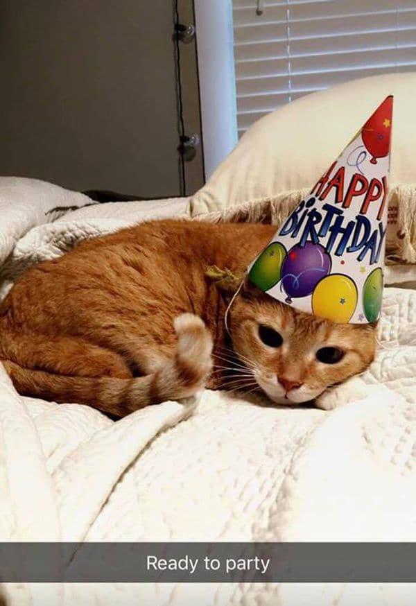 La concurrencia de la fiesta fue de 12 personas íntimas de Luna. Luego de horas de diversión y comida, el felino quedó definitivamente agotado (Facebook Quinceañera Cat)