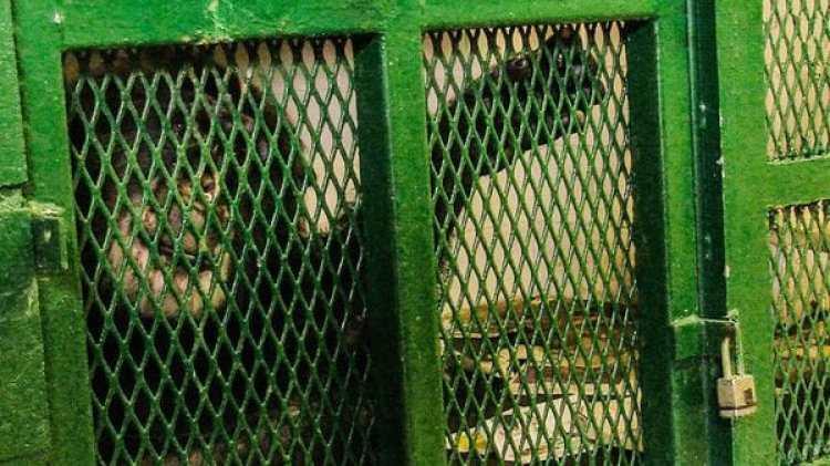 Tommy, encerrado en una jaula:el Proyecto de los Derechos de los No Humanos denunció su caso.