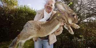"""Los dueños del conejo """"gigante"""" muerto tras un vuelo de United denunciaron a la aerolínea"""