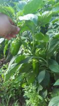 protección cultivos 1