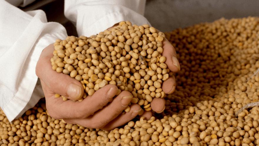 Resultado de imagen de consumo de soya