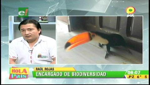 Santa Cruz: Salvan tucán que iban a vender por Facebook