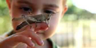 Adiós a los insectos de tu infancia