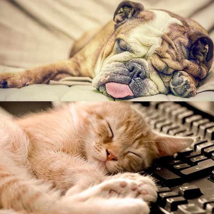 Las mascotas son sin lugar a dudas los principales embajadores de la cultura de la siesta
