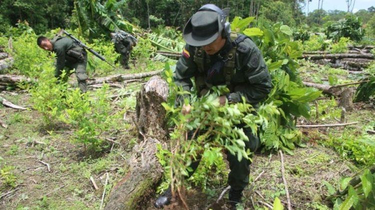 Erradicación de un cultivo de coca en Colombia