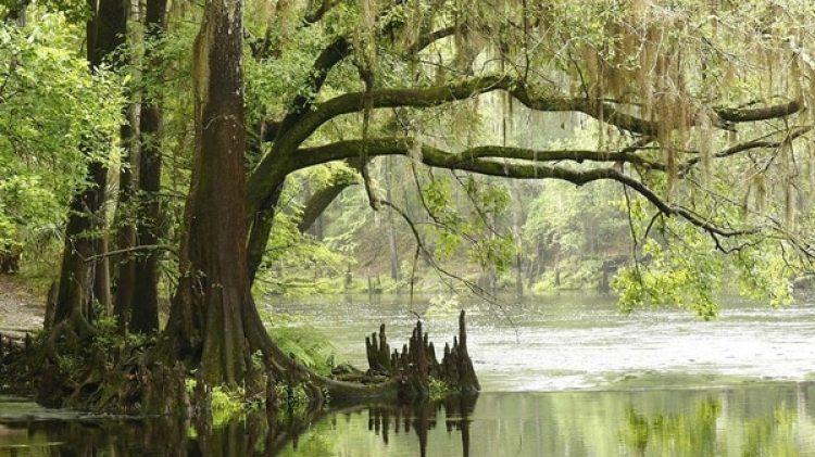 El Parque Everglades fue creado en 1947 por el Congreso estadounidense tanto por su belleza natural como por su valor ecológico