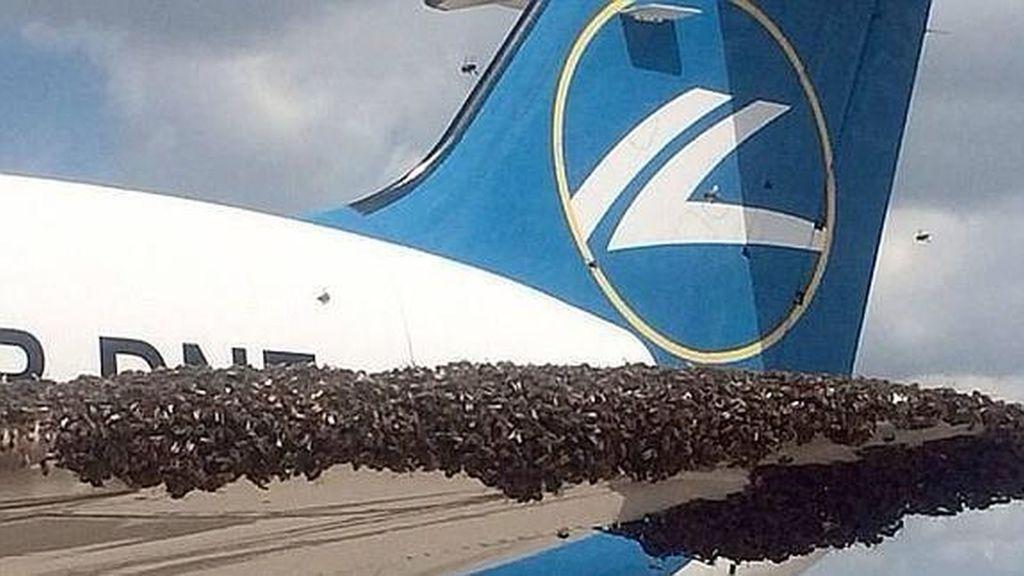 Un enorme enjambre de abejas  en el ala de un avión comercial.