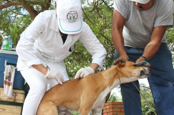 Resultado de imagen para vacunación antirrábica en Cochabamba