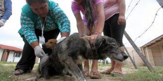 Se inicia la vacunación de perros; en 89 barrios las brigadas irán casa por casa