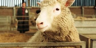¿La clonación 'mató' a la oveja Dolly? Desmienten el mayor mito sobre su muerte