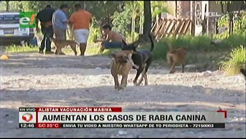 Santa Cruz: Suben a 478 los casos de rabia canina, hay emergencia sanitaria