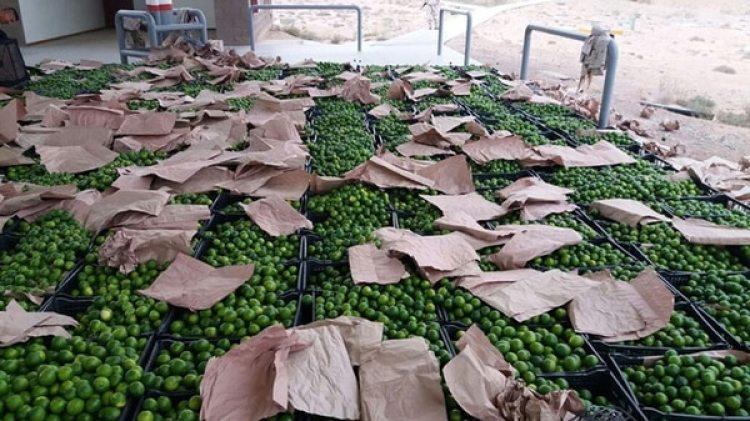 Los paquetes de droga estaban ocultos debajo de una cargamento de limones (La serena)