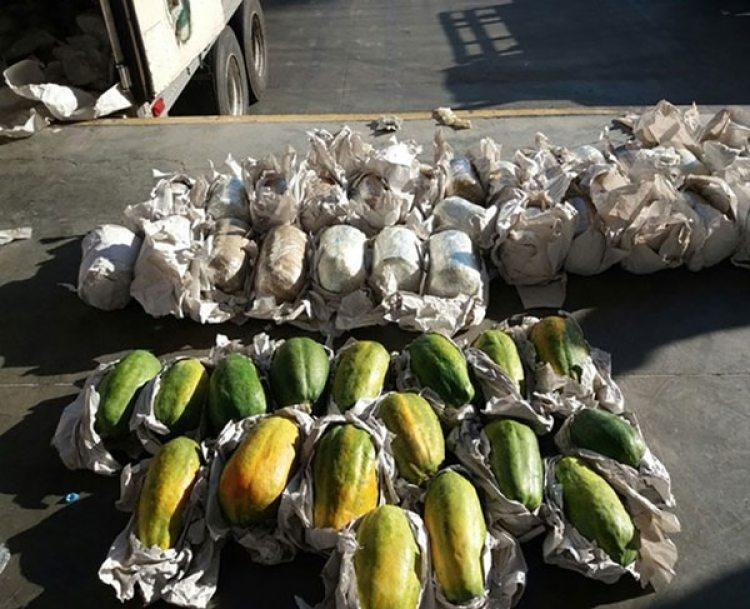 La marihuana decomisada debajo de las papayas (foto: Policia federal)