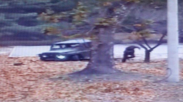 Así escapó el soldado norcoreano a través de la Zona de Seguridad Conjunta