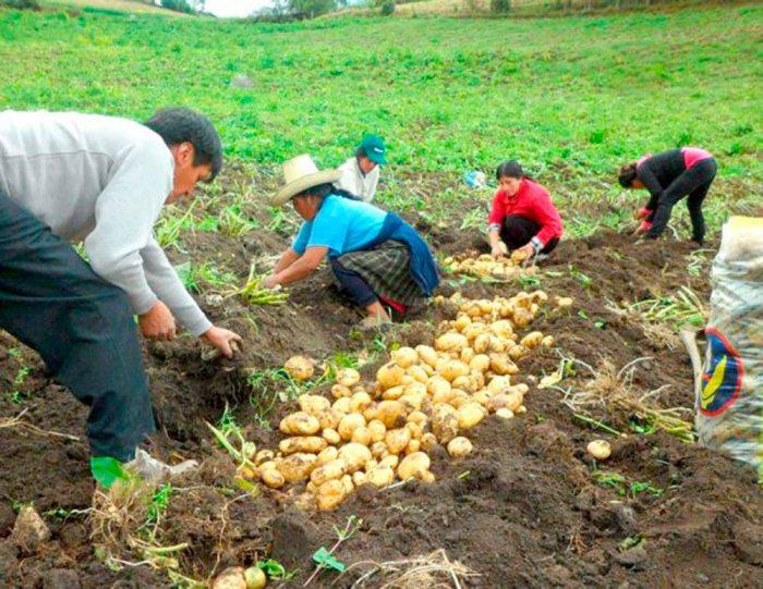 EXPERTO PROPONE REVOLUCIÓN AGRARIA EN OCCIDENTE CON CAPACIDAD GERENCIAL Y EXPORTADORA.