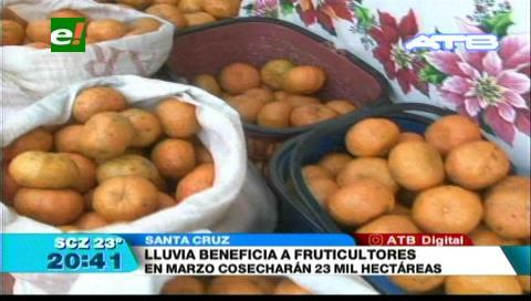 Santa Cruz: Lluvia beneficia a fruticultores