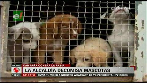 Santa Cruz: Decomisan animales en venta que no contaban con vacunas