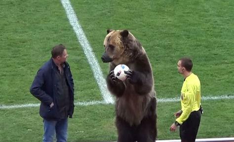 El oso pardo sostiene el balón. Foto: Captura YouTube