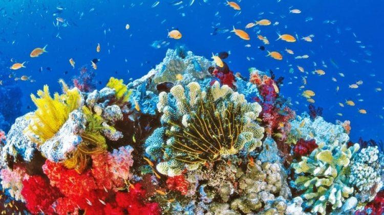 El blanqueamiento de la barrera coralina australiana se debe en parte al protector solar en el agua.