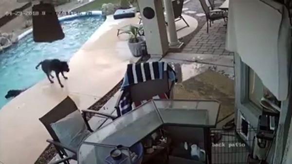 Un perro salvó a otro de ahogarse en la pileta