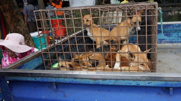 Perros en un mercado de Indonesia (AP)