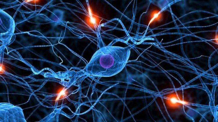 Las mitocondrias son unos orgánulos en el interior de la células encargadas de convertir los nutrientes en energía química que puede ser empleada por las células