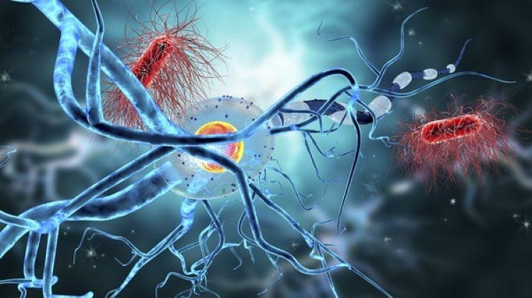 Los defectos en los genes mitocondriales pueden causar enfermedades, pero los investigadores también saben que la mitocondria se vuelve menos eficiente con la edad