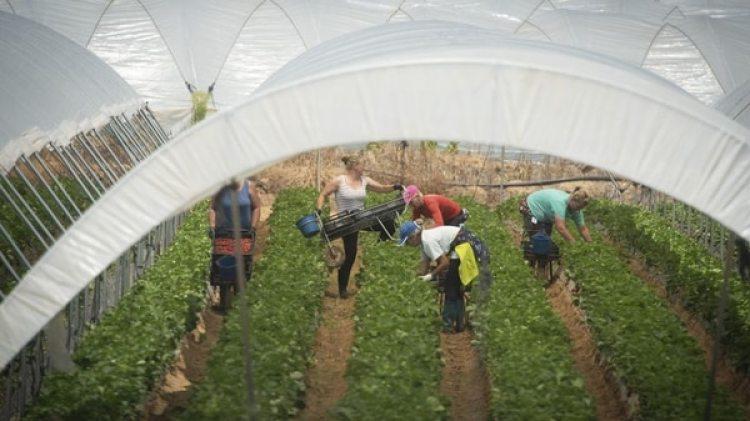 Las migrantes trabajan hasta medianoche por menos de 30 euros al día (Foto cedida por Marcos Moreno)