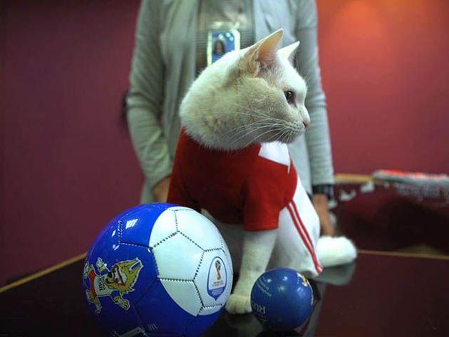 El sorprendente pronóstico del gato Aquiles para el Francia vs Bélgica