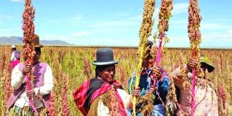 Reportan incremento del consumo de quinua en Bolivia
