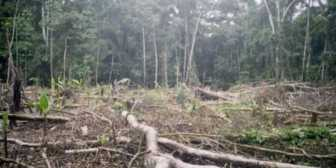 Mineros deforestan 1.700 hectáreas de Amazonía en 2018