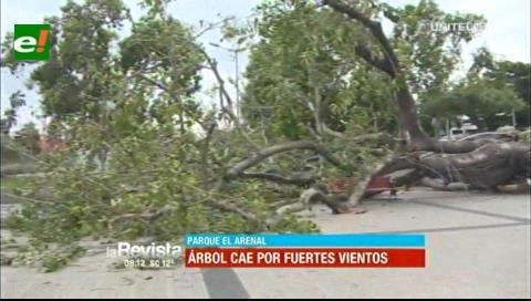 Fuertes vientos en Santa Cruz: Árbol cae sobre banquetas en el Parque El Arenal