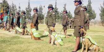 Cochabamba. Un cementerio guarda cuerpos de canes antidrogas