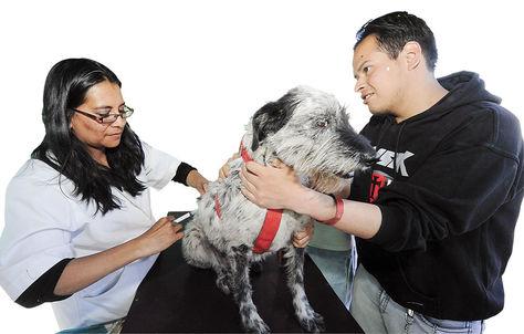 PROTECCIÓN. Un can vacunado en 2017 en La Paz.