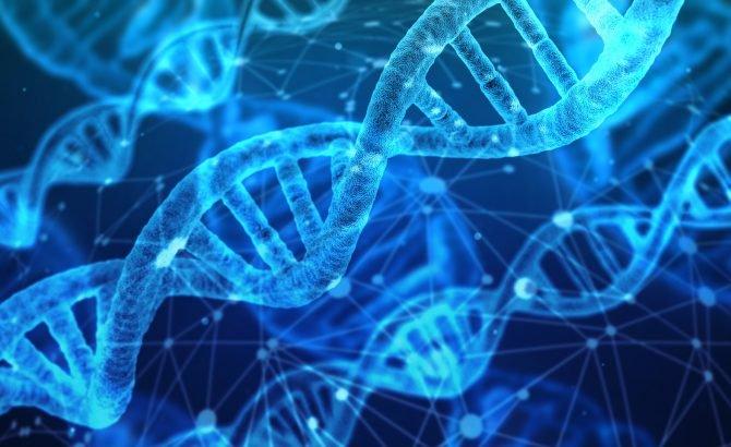 El genoma humano podría contener un 20% menos de genes codificantes