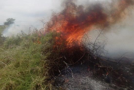 Bomberos controlan un incendio forestal registrado en la comunidad de Carachimayo