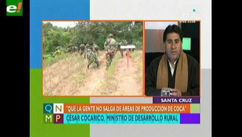 Cocarico: Incremento del 6% de la producción de la hoja de coca es manejable