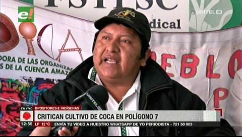 Oposición critica existencia de coca en Polígono 7, MAS dice que no es en el Tipnis
