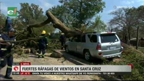 Fuertes vientos provocan la caída de un enorme árbol sobre dos vehículos