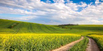 El mercado de propiedades rurales: ¿qué recomiendan los expertos para la compra y venta?