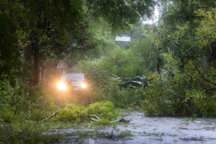 Cientos de arboles colapsaron enWilmington, Carolina del Norte.(EFE/EPA/JIM LO SCALZO)