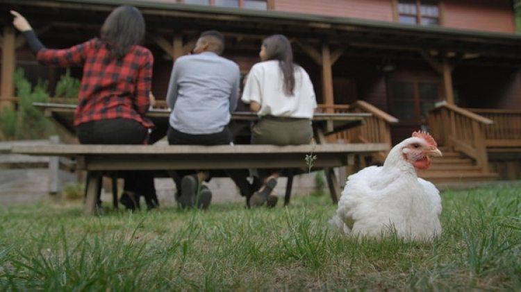 En lugar de criar y matar pollos,se crea su tejido muscular en un biorreactor, a partir desus células.
