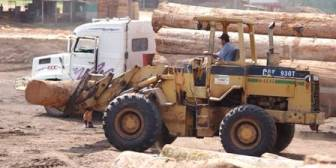 Forestales temen ahondar crisis ven inviable pagar el segundo aguinaldo