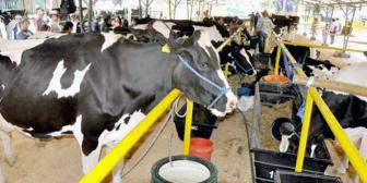 Exportación de lácteos cae en 35% en ocho meses