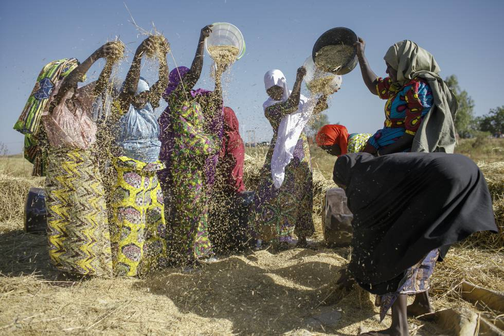 Un grupo de mujeres separa el arroz de las impurezas en Arugungo.